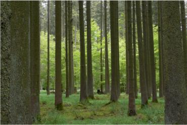 files/fM_w0002/images/wald.jpg